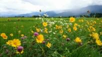 安曇野風景写真 twitter@tenmasawa (39)