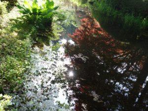 満願寺 水鏡 2