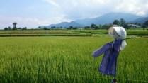 安曇野風景写真 twitter@tenmasawa (148)