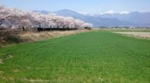 安曇野風景写真 twitter@tenmasawa (66)