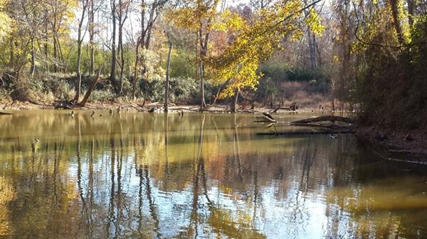 Lovitt Woods Trail