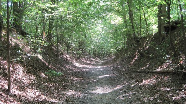 Deep rutted road in the middle of a green summer forest