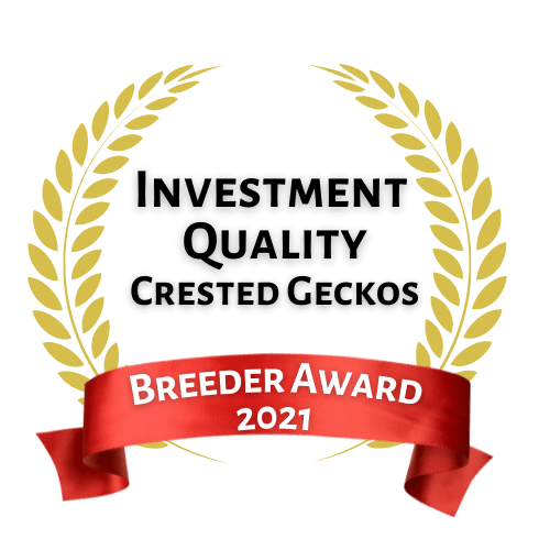 Investment Quality Crested Gecko Breeder