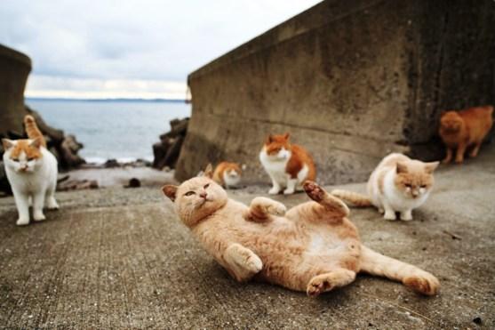 foto foto menakjubkan dari pulau Surga Kucing di Jepang - Foto Kucing di Fukuoka Jepang 17