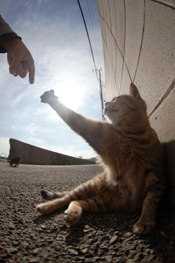 foto foto menakjubkan dari pulau Surga Kucing di Jepang - Foto Kucing di Fukuoka Jepang 19