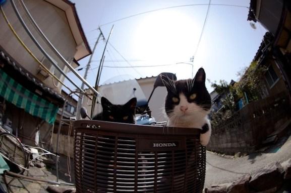 foto foto menakjubkan dari pulau Surga Kucing di Jepang - Foto Kucing di Fukuoka Jepang 22