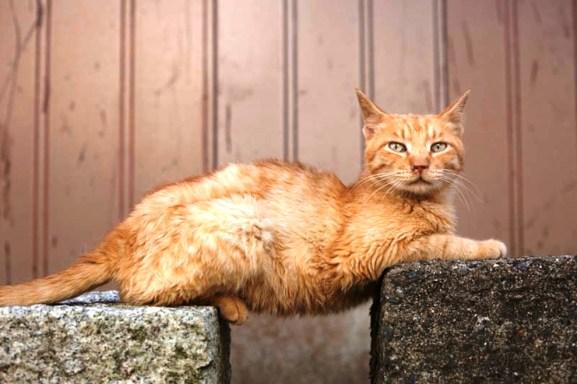 foto foto menakjubkan dari pulau Surga Kucing di Jepang - Foto Kucing di Fukuoka Jepang 30