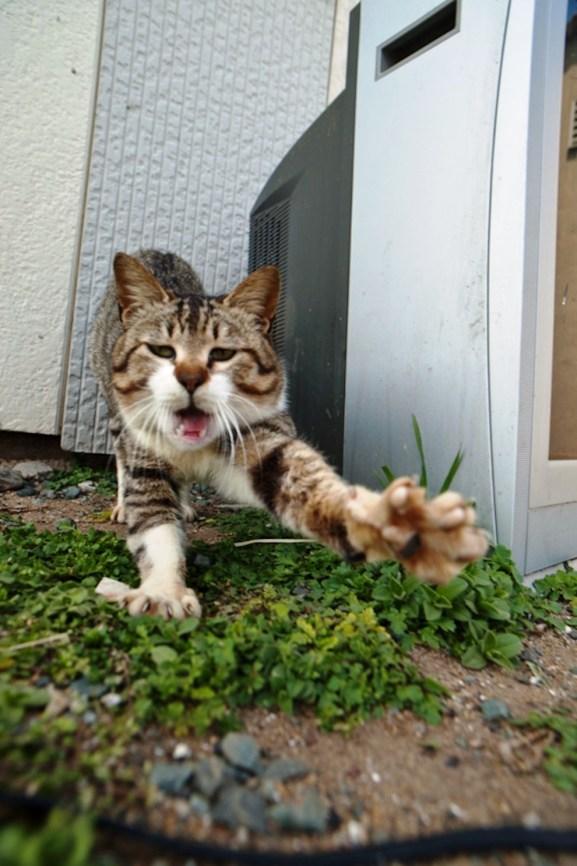 foto foto menakjubkan dari pulau Surga Kucing di Jepang - Foto Kucing di Fukuoka Jepang 33