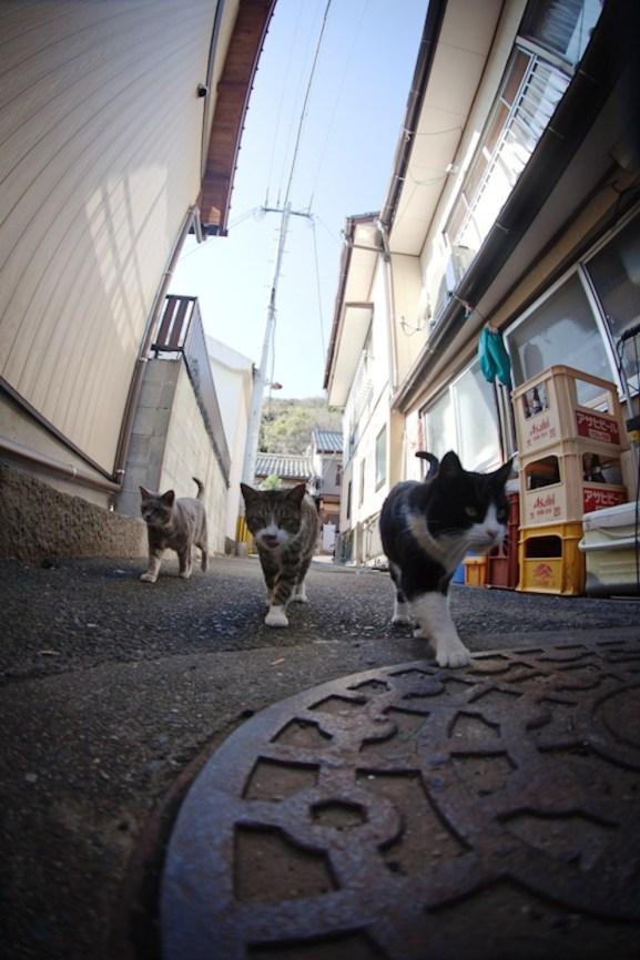 foto foto menakjubkan dari pulau Surga Kucing di Jepang - Foto Kucing di Fukuoka Jepang 36