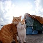 50 Foto Foto Menakjubkan dari Pulau Surga Kucing di Jepang