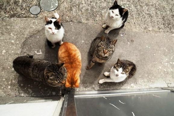 foto foto menakjubkan dari pulau Surga Kucing di Jepang - Foto Kucing di Fukuoka Jepang 39