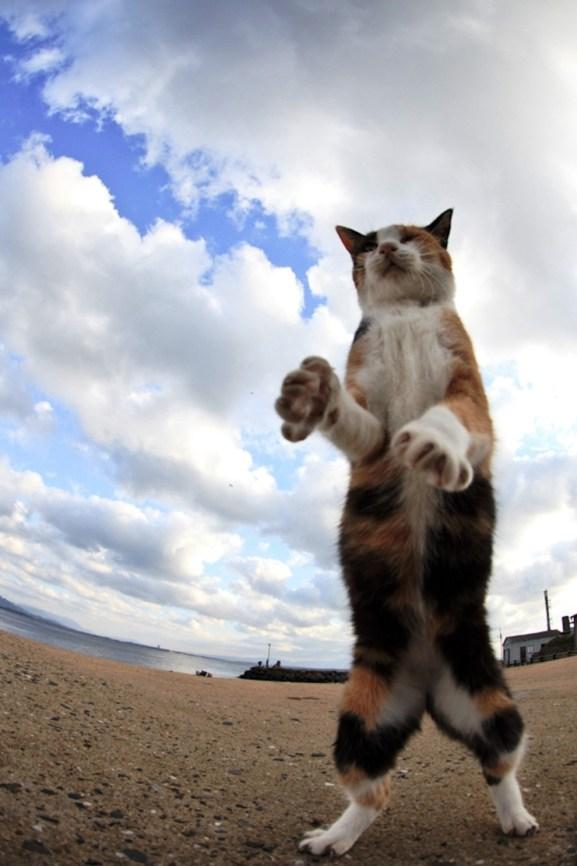 foto foto menakjubkan dari pulau Surga Kucing di Jepang - Foto Kucing di Fukuoka Jepang 40