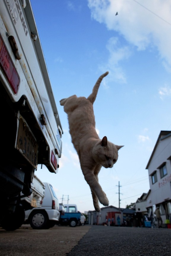 foto foto menakjubkan dari pulau Surga Kucing di Jepang - Foto Kucing di Fukuoka Jepang 44