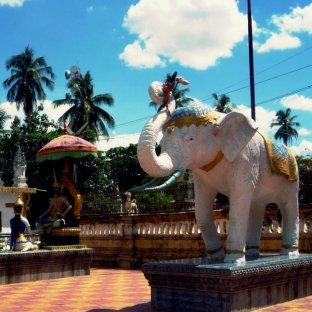 Elephant in Wat Damrey