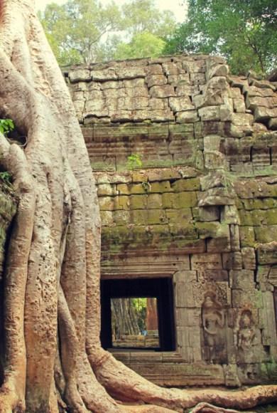The Big L - Crocodile tree over Ta Prohm