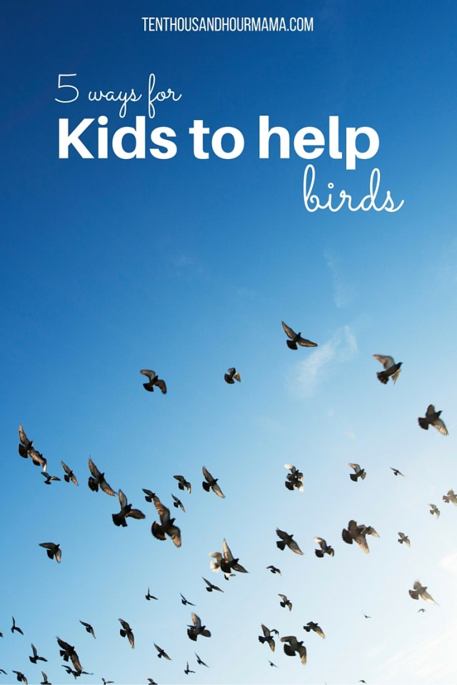 ways for kids to help birds