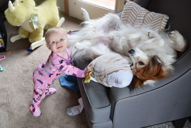baby dog playing