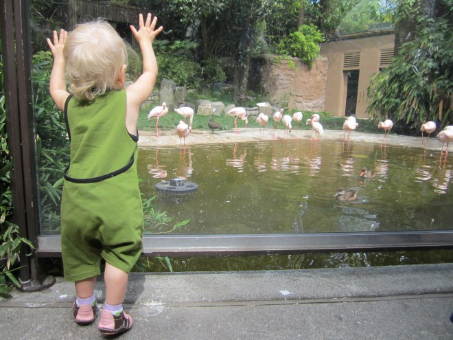 Oregon Zoo - flamingos - Ten Thousand Hour Mama