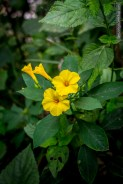 flowers-of-dhulikhel-mountain-resort-18