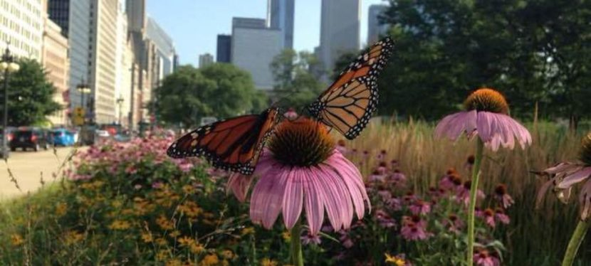 Urban Gardeners Can Save the World, One Butterfly Garden at a Time