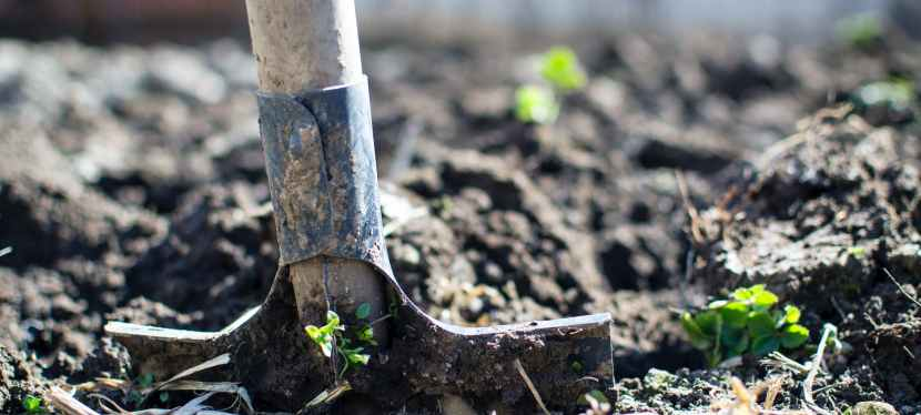 Coronavirus Gardening: 5 Plants to Grow in Your Urban Victory Garden