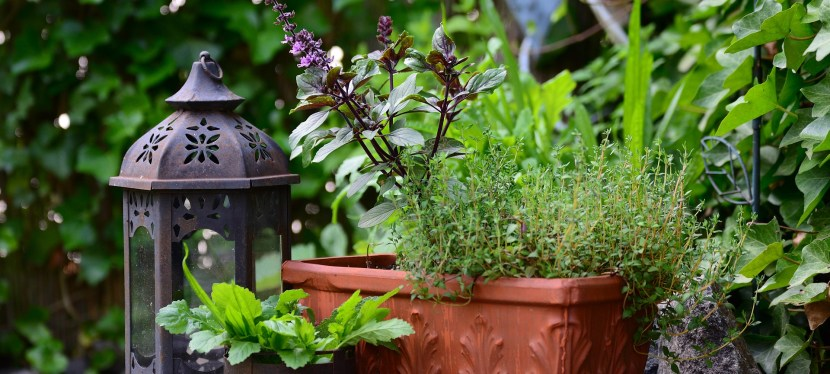 10 Ways to Use Up Those Summer Herbs