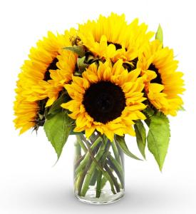 avasflowers-sunflower-bouquet-12-stems-including-vase-14861_max