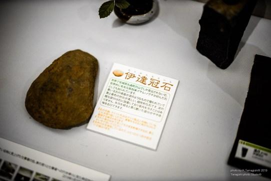 yamanaka-9638