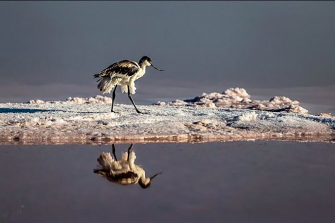 Le lac d'Ourmia, le 4 juillet 2016 Tasnim News via Wikimedia Commons