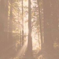 Em reverência, caminhando entre as mais altas árvores - Redwoods, as Sequoias da costa