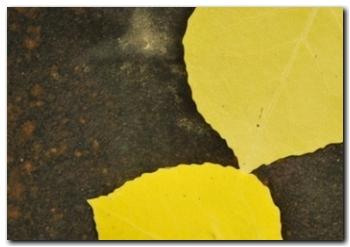 terapia-gestalt-madrid-hojas