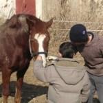 sesión de terapia asistida con caballo