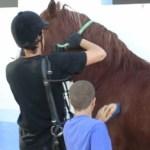 Niño limpiando un caballo