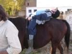 Formación especializada en Terapias asistidas con Animales 2012