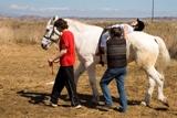 Terapias asistidas con caballos