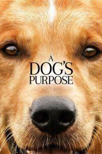 Nonton Film A Dog's Purpose (2017) Subtitle Indonesia Streaming Movie Download
