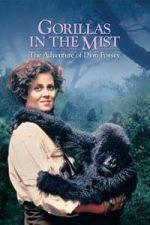 Nonton Film Gorillas in the Mist (1988) Subtitle Indonesia Streaming Movie Download
