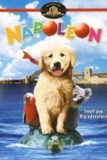 Nonton Film Napoleon (1995) Subtitle Indonesia Streaming Movie Download