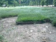 formowanie trawnika 3
