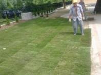 formowanie trawnika 6