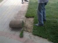formowanie trawy przy krawężnikach
