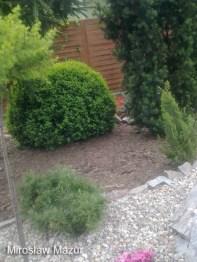 rośłiny w skalnym ogrodzie