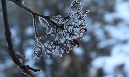 Appreciating the beauty in winter