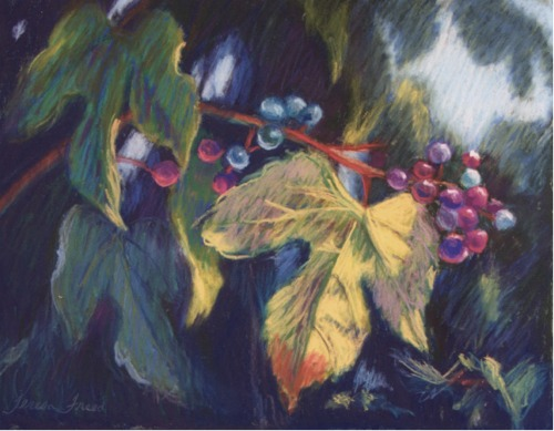 Porcelain Berry - from the archives