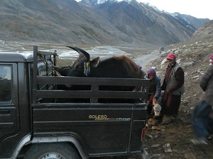 Nomads on lower Penzi La Pass