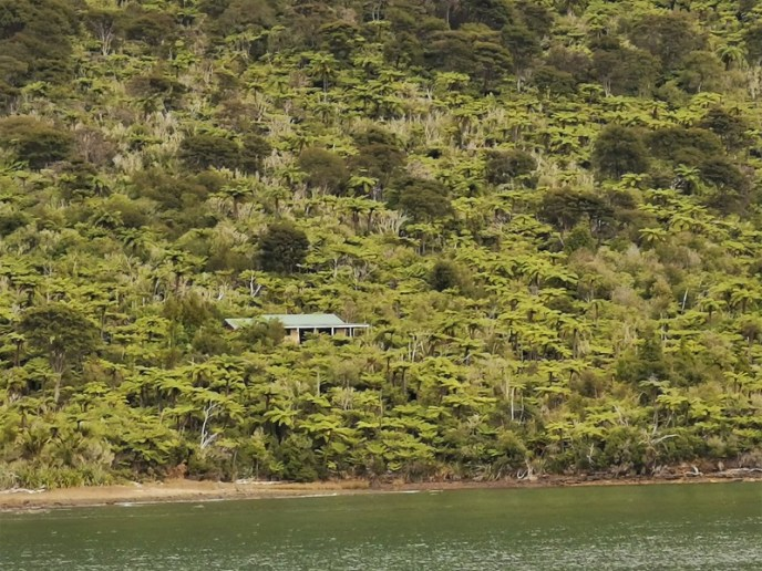 A house among the native bush seen from the 'Mail Boat'