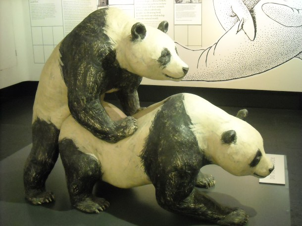 Panda sex. Your argument is invalid. (Museum of Sex, 2013)