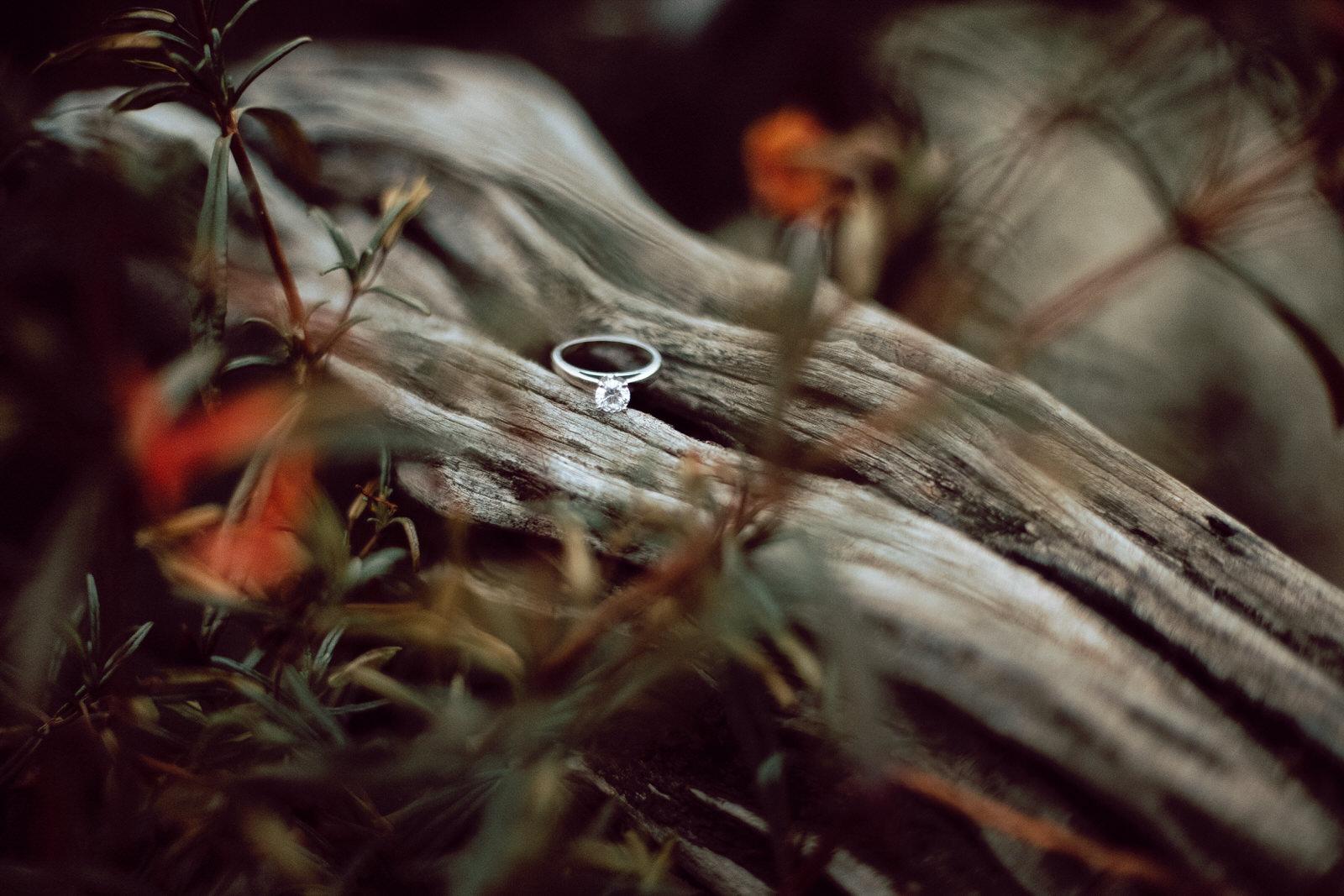A diamond wedding ring resting on a cypress tree branch
