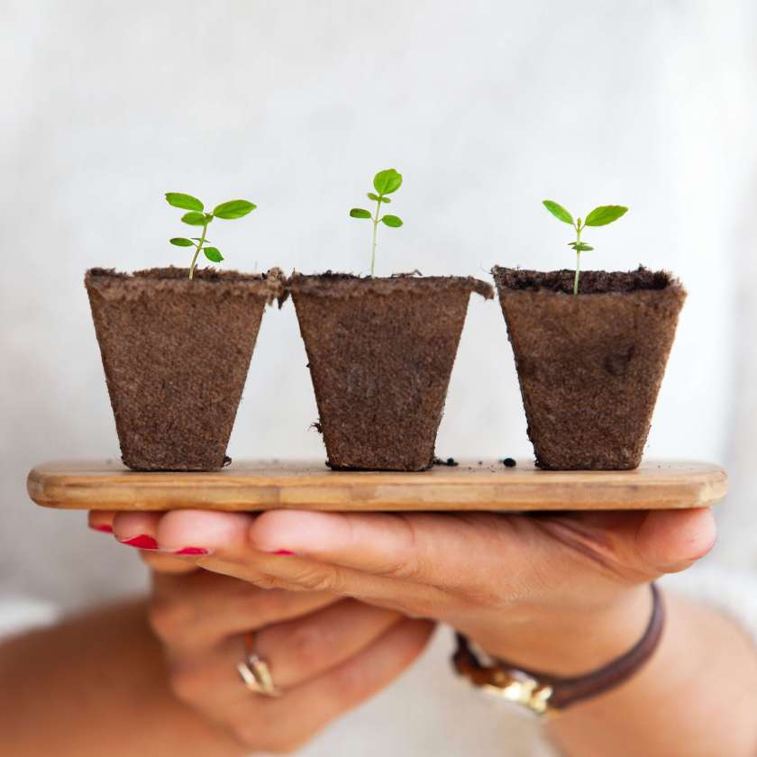 Hands hold a tray. Three sprouts in three small pots sit on the tray.