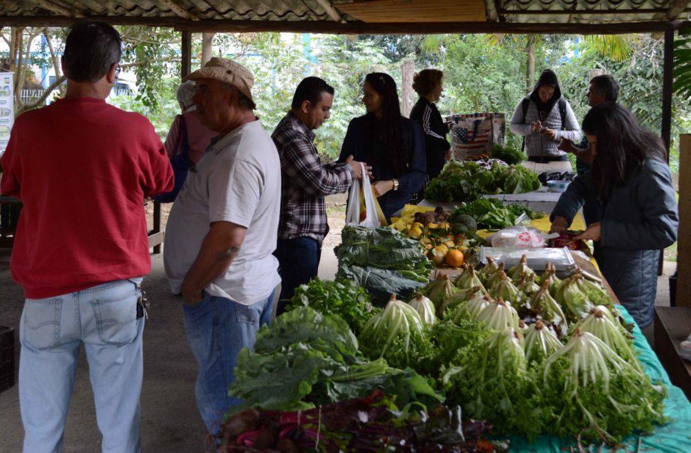 Produtores orgânicos realizam programação especial pelo Dia do Meio Ambiente